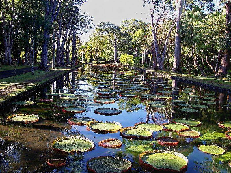 Photos iles maurice belles photos de l 39 les maurice for Jardin japonais fond d ecran