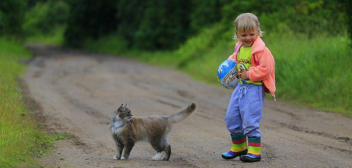Que faire du chat pendant les vacances ?