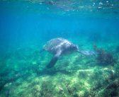 La préservation des sites naturels face au tourisme de masse