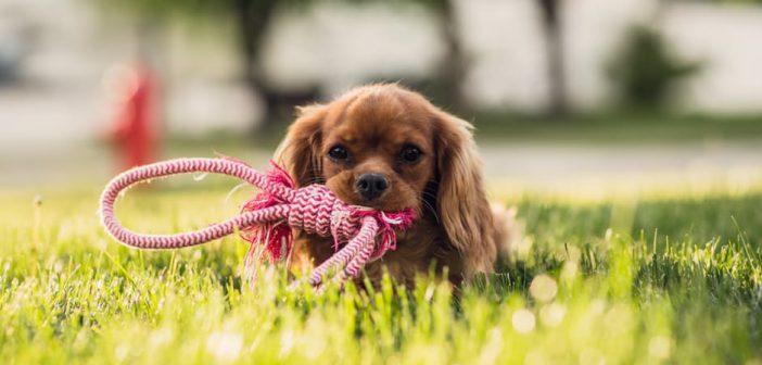 Faut-il prendre une laisse ou un harnais en vacances pour son chien ?