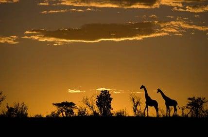 voyage-solidaire-afrique